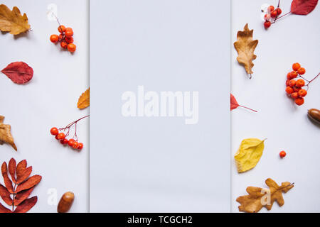 Autumn leaves, rowan and acorns on a white background. In the middle of the empty space for text. - Stock Image