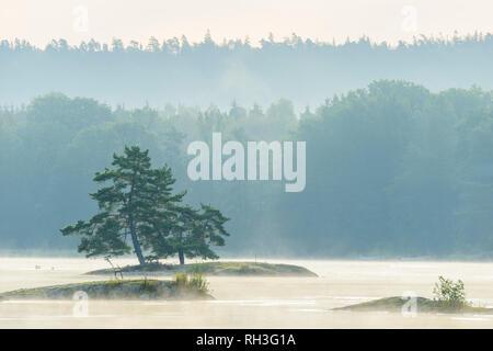 Trees in fog - Stock Image