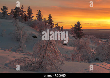 Winter landscape  at sunset with nice color in the sky and snowy trees, mountain in background, Gällivare county, Swedish Lapland, Sweden - Stock Image