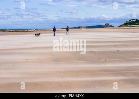 Walkers with dogs on the beach between Low Newton by the Sea and Embleton Bay, Northumberland, on a sunny but windy day during Storm Helene, with Dunstanburgh Castle in the background. 18th September, 2018. - Stock Image