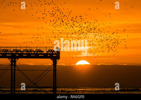 Aberystwyth Wales, UK. 02nd Jan, 2019. As the sun sets on a clear cold evening, after a day of unbroken winter sunshine, flocks of tens of thousands of tiny starlings fly in from their daily feeding grounds to roost for the night on every possible surface on the forest of cast iron legs underneath Aberystwyth's Victorian seaside pier. Aberystwyth is one of the few urban roosts in the country and draws people from all over the UK to witness the spectacular nightly displays. photo Credit: keith morris/Alamy Live News - Stock Image