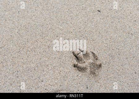 Dog paw prints on sandy beach. Metaphor pet ownership, dog ownership. - Stock Image