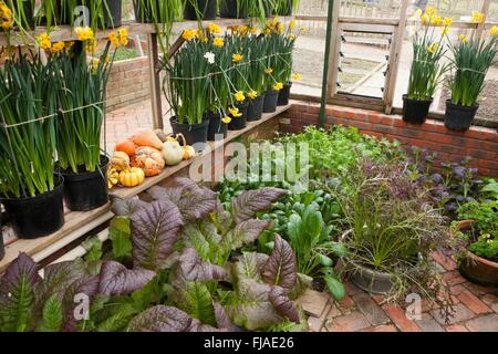 Winter in the  Greenhouse at Rosemoor - Stock Image