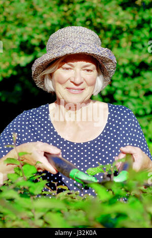 Smiling senior woman with a straw hat trimming the hedge of her garden yard on a sunny summers day, joy of gardening - Stock Image
