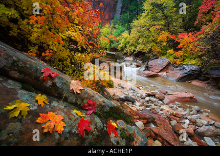 Zion Fall - Stock Image