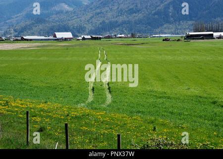 Hay field in Matsqui, British Columbia - Stock Image
