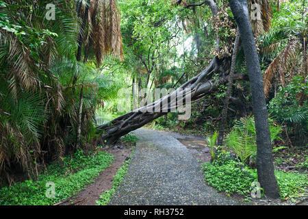 Fallen tree above footpath - Stock Image