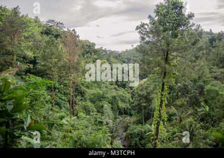 forest in the mountains - Stock Image