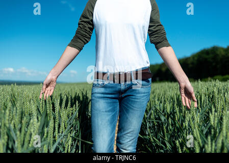 woman running her hands through ripening wheat in a field, close up. - Stock Image