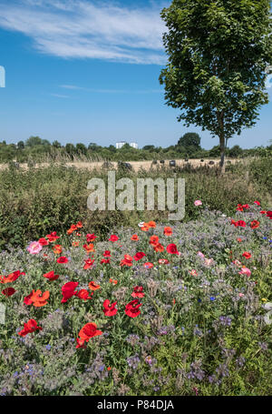 Wild flowers growing alongside Bromwich Parade, a tranquil public walkway in central Worcester, Worcestershire, West Midlands UK - Stock Image