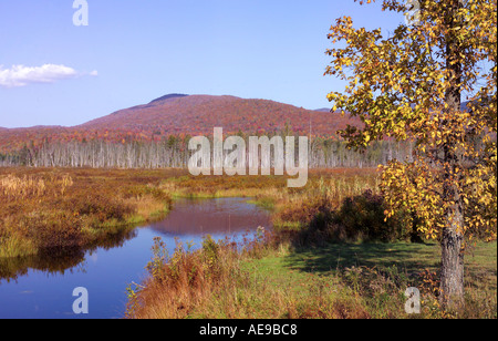 Vermont marsh during fall foliage - Stock Image