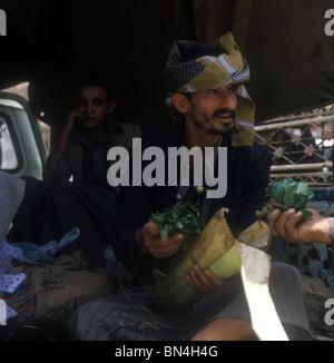 Qat seller Bait al Faqih Yemen - Stock Image
