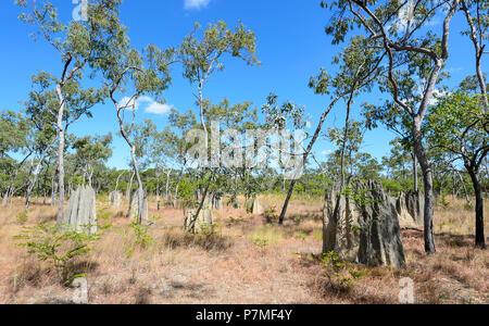 View of magnetic termite mounds, Cape York Peninsula, Far North Queensland, FNQ, QLD, Australia - Stock Image
