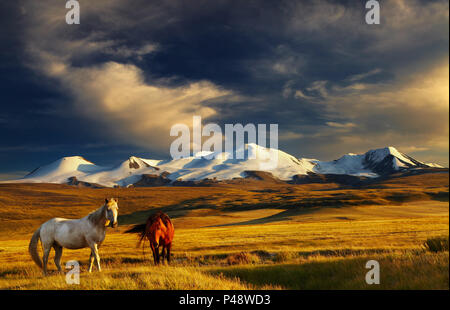 Grazing horses at sunset, plateau Ukok, the junction of Russian, Mongolian and Chinese boarders - Stock Image