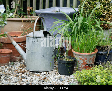 galvanised steel watering can garden with pots, containers and plants on gravel. - Stock Image