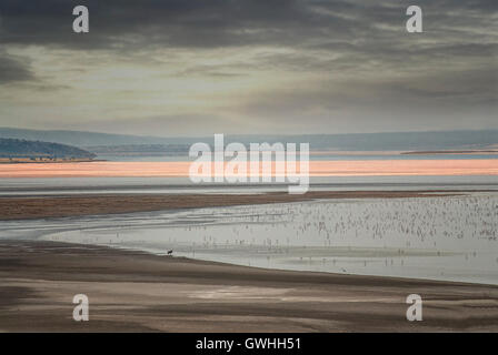 Landscape of Lake Magadi with flamingos and a single wildebeest. Kenya, Africa. - Stock Image