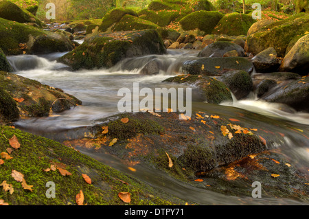Autumn leaves on granite rocks in the River Aune in Dartmoor National Park - Stock Image