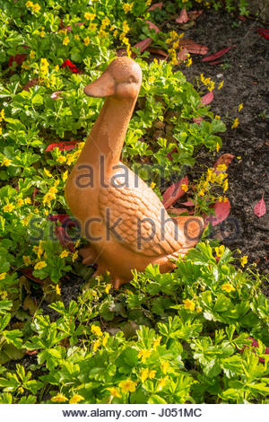 Terra cotta garden goose surrounded by ivy and Waldsteinia ternata (golden strawberry) ground cover. - Stock Image