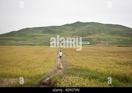 Campagne Nord coréenne le 7 octobre 2012. Country side in North korea the 7 of October. - Stock Image