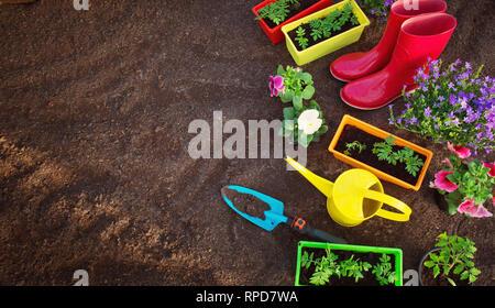 flower and vegetable seedlings growing in the garden - Stock Image