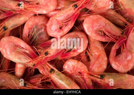 Fresh shrimps background close up full frame. - Stock Image