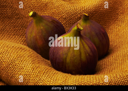 Harvest of Fresh Figs on Sacking - Stock Image