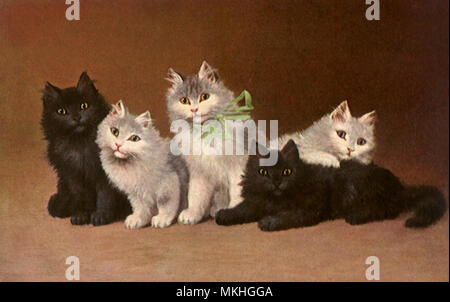 Two Black and Three White Kittens - Stock Image