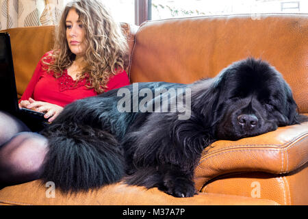 Beautiful young, long haired, caucasian woman, sitting at a laptop on the sofa, with her giant breed, pet Newfoundland - Stock Image