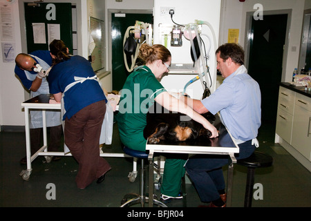 The Busy Prep Room in a Veterinary Clinic in the UK - Stock Image