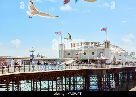 A seagull flies in front of Brighton Pier entrance. - Stock Image