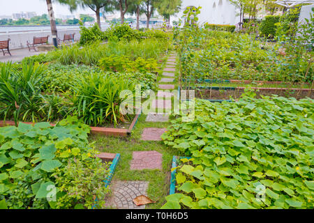 Dome organic garden, by the river, Tha Phra Chan, Bangkok, Thailand - Stock Image