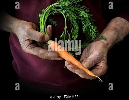 A farmer or gardener cradling a carrot - Stock Image