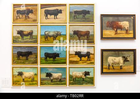 Portraits of bulls, Museo Taurino (Bull Fighting Museum), Plaza de Toros (bullring), Seville, Spain - Stock Image