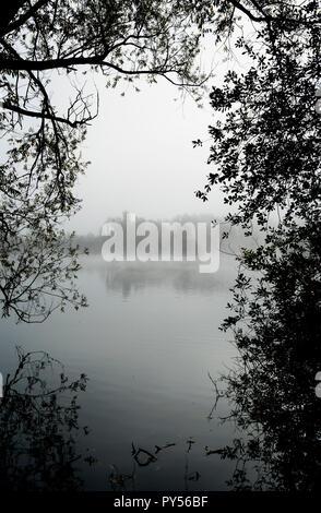 Misty lake through trees - Stock Image