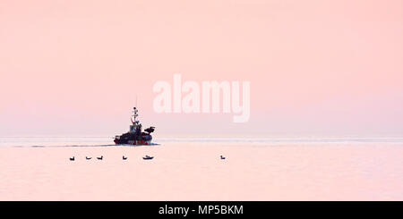 A solitary fishing boat heads out to sea from Scarborough in the pink light of dawn. - Stock Image