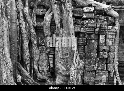 Silk-cotton tree roots growing over the SE side of Gopura III, Ta Prohm Temple, Angkor, Cambodia - Stock Image