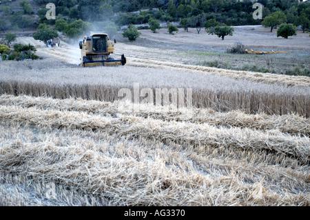 Agriculture Summer Lloret de Vistalegre Llorito Mallorca Majorca Spain Balearic Islands Mediterranean - Stock Image