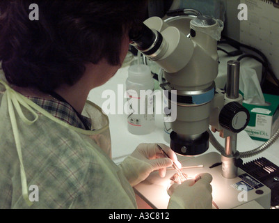 Working with a microscope - Stock Image