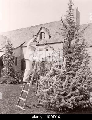 Man decorating pine tree in his backyard - Stock Image