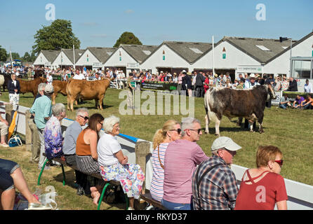People watching the prize winning cattle parade at the Great Yorkshire Show. - Stock Image