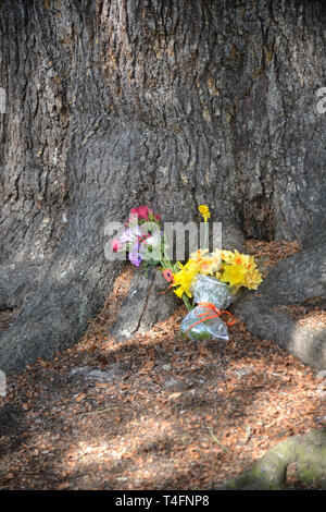 Floral tribute at the base of a tree close to Holy Trinity Church, Stratford upon Avon, Warwickshire - Stock Image