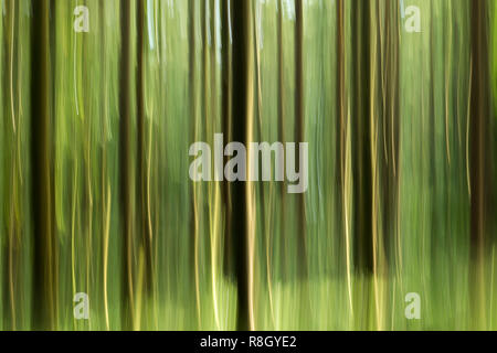 Intentional Camera Movement (ICM) photo of trees in woodland abstract. Tipperary, Ireland - Stock Image