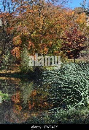 Glasgow, UK. 15th, October, 2018. Glasgow, Scotland, UK. A bright sunny day in Kelvingrove Park, Glasgow with the stunning Autumn colours reflected in the wildlife pond Credit: Douglas Carr/Alamy Live News - Stock Image