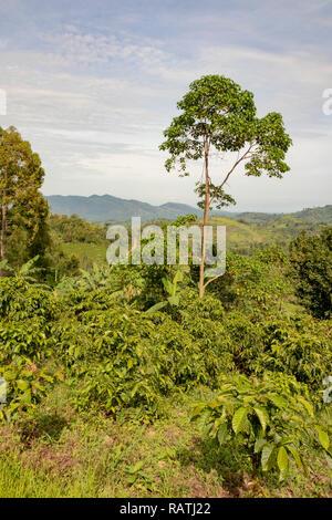 landscape beside Bwindi Impenetrable Forest National Park, Uganda, Africa - Stock Image
