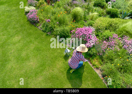Young female planting flower in garden,aerial view - Stock Image