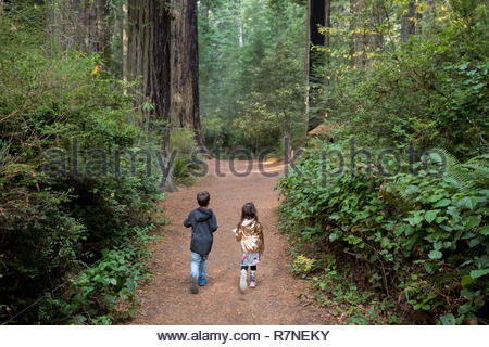 Brother and sister hike along a worn trail along the Lady Bird Johnson Grove Trail in the California Redwoods National Park in coastal Northwest Calif - Stock Image