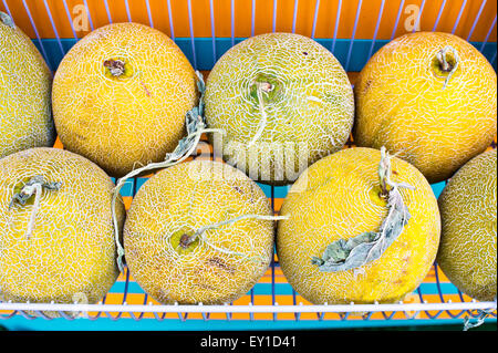 Fresh melons on sale at a market - Stock Image