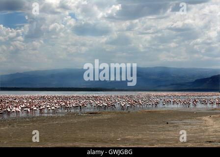 Landscape of flamingos on Lake Nakuru, Kenya. Africa. - Stock Image