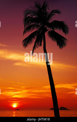 Palm tree silhouette at sunset, Chang island, Thailand - Stock Image