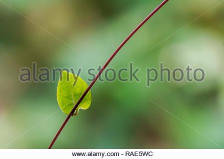 single green nature leaf on natural background - Stock Image